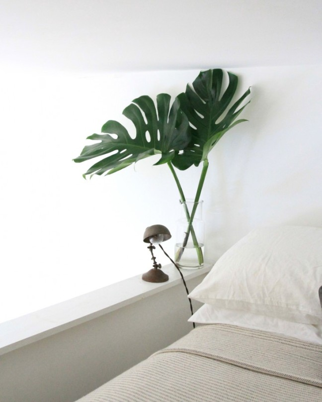 Decor_Monstera_2