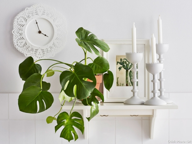 Decor_Monstera_3
