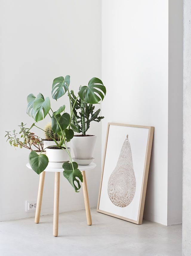 Decor_Monstera_4