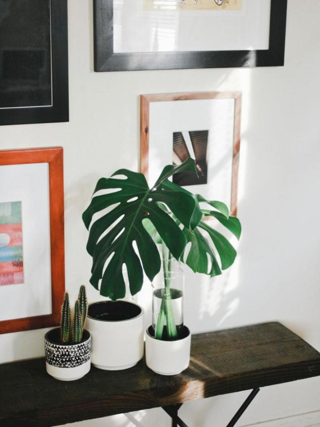 Decor_Monstera_8