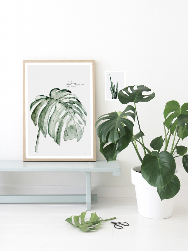 Decor_Monstera_9