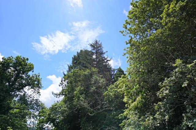 Sequoias_Cantabria_1