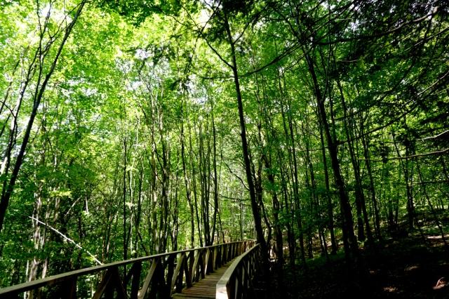 Sequoias_Cantabria_3