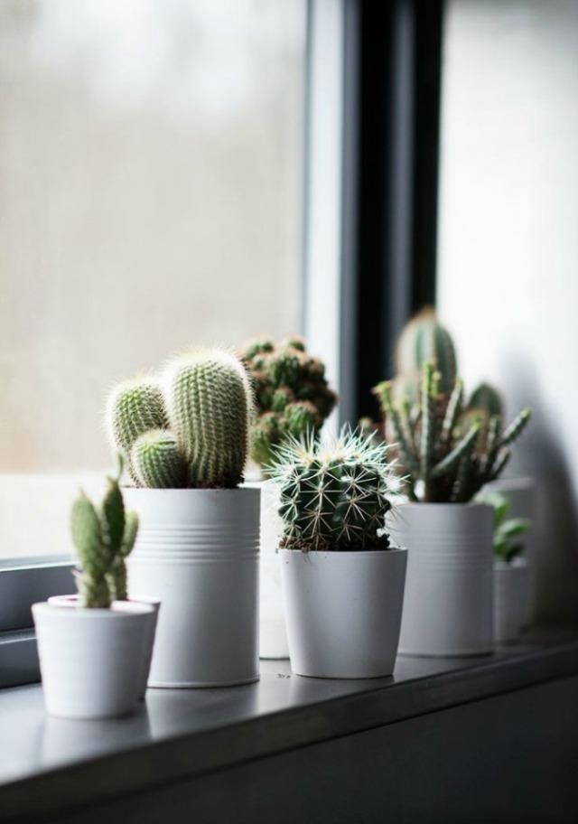 cactus_decor_7