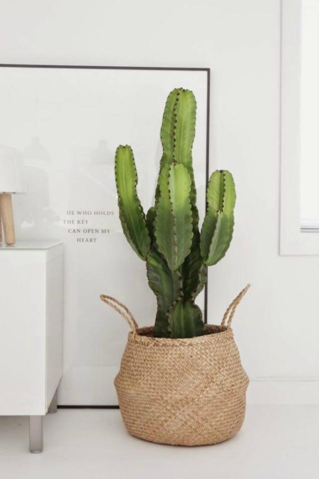 3. Cactus