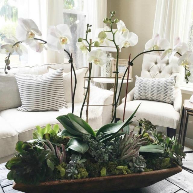 9. Orquideas